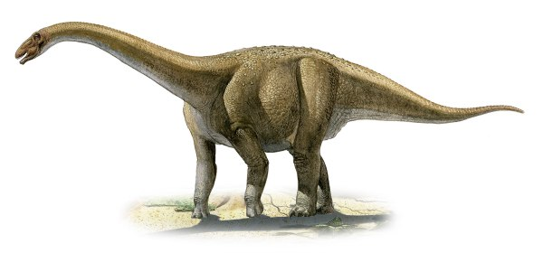 Rapetosaurus krausei, a prehistoric era dinosaur from the Cretaceous period.