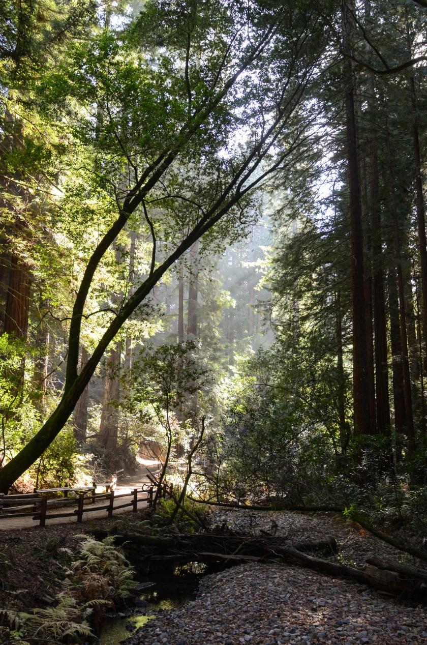 Muir Woods Mill Valley, CA
