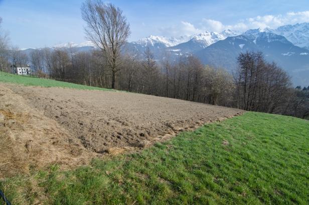Uno dei campetti in cui Patrizio coltiva il grano saraceno autoctono