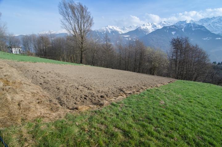 I campetti in cui Patrizio Mazzucchelli coltiva il grano saraceno autoctono a Teglio