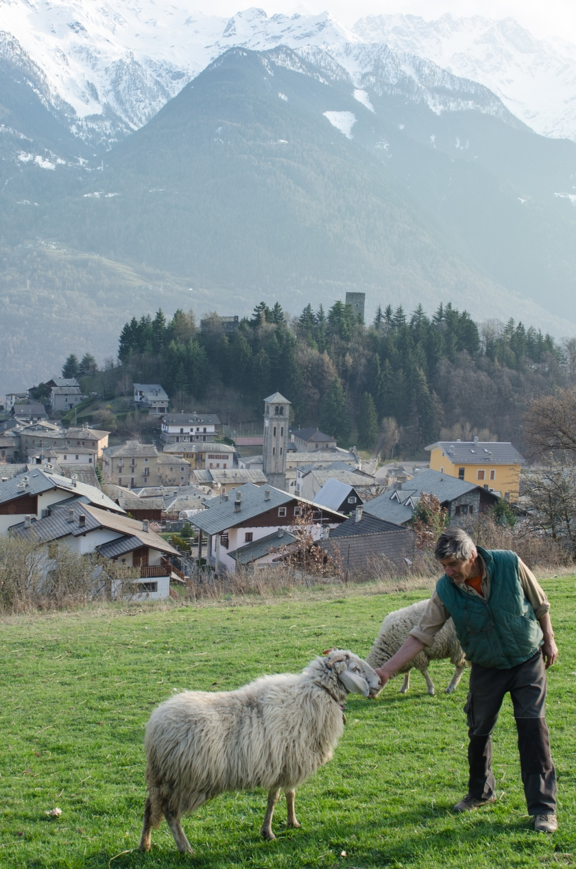 Patrizio con una pecora Ciuta del suo piccolo allevamento. La pecora Ciuta è una tipica varietà di pecora valtellinese a rischio di estinzione.