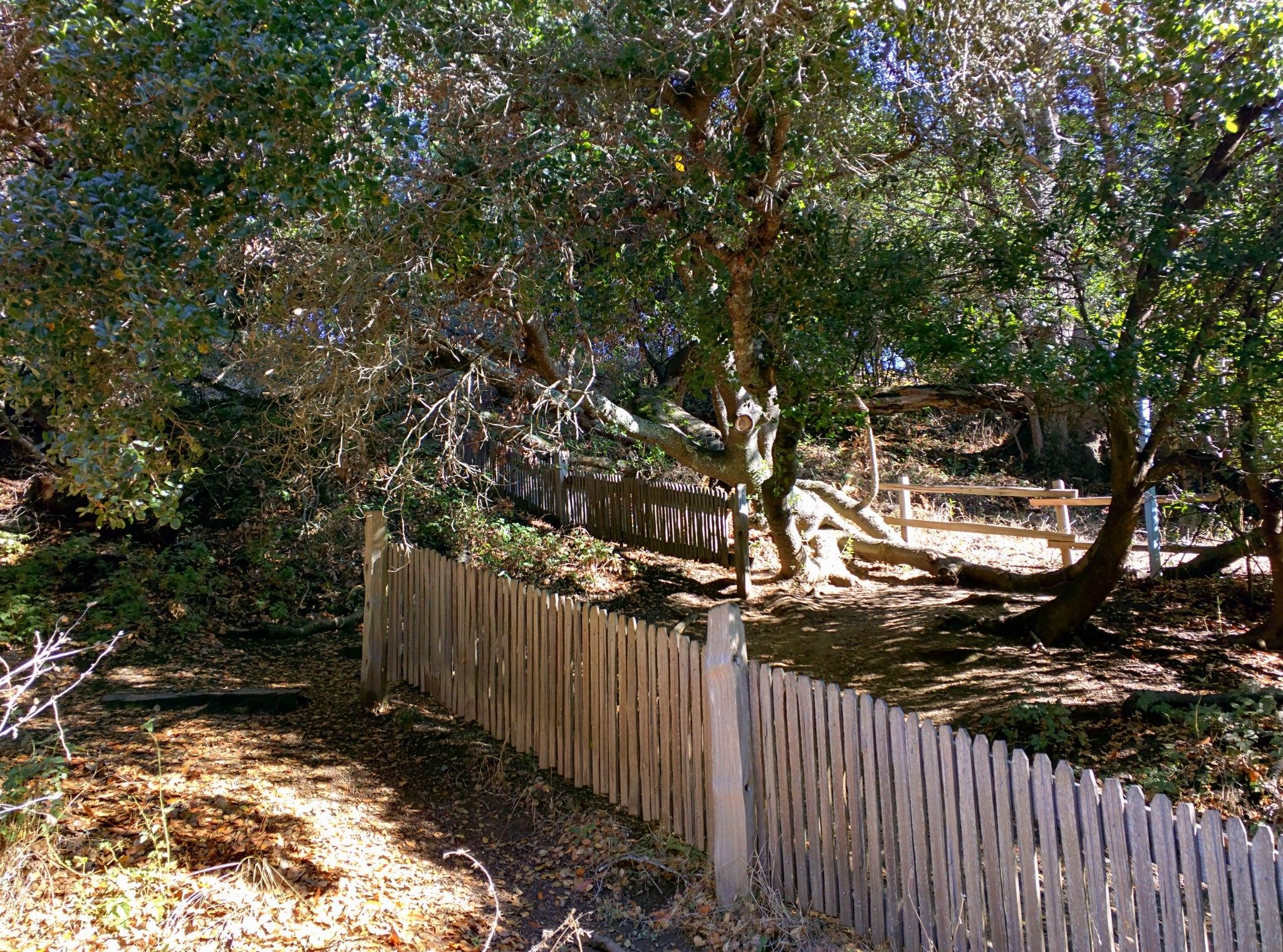 La staccionata separata dal terremoto del 1906 lungo l'Earthquake trail.