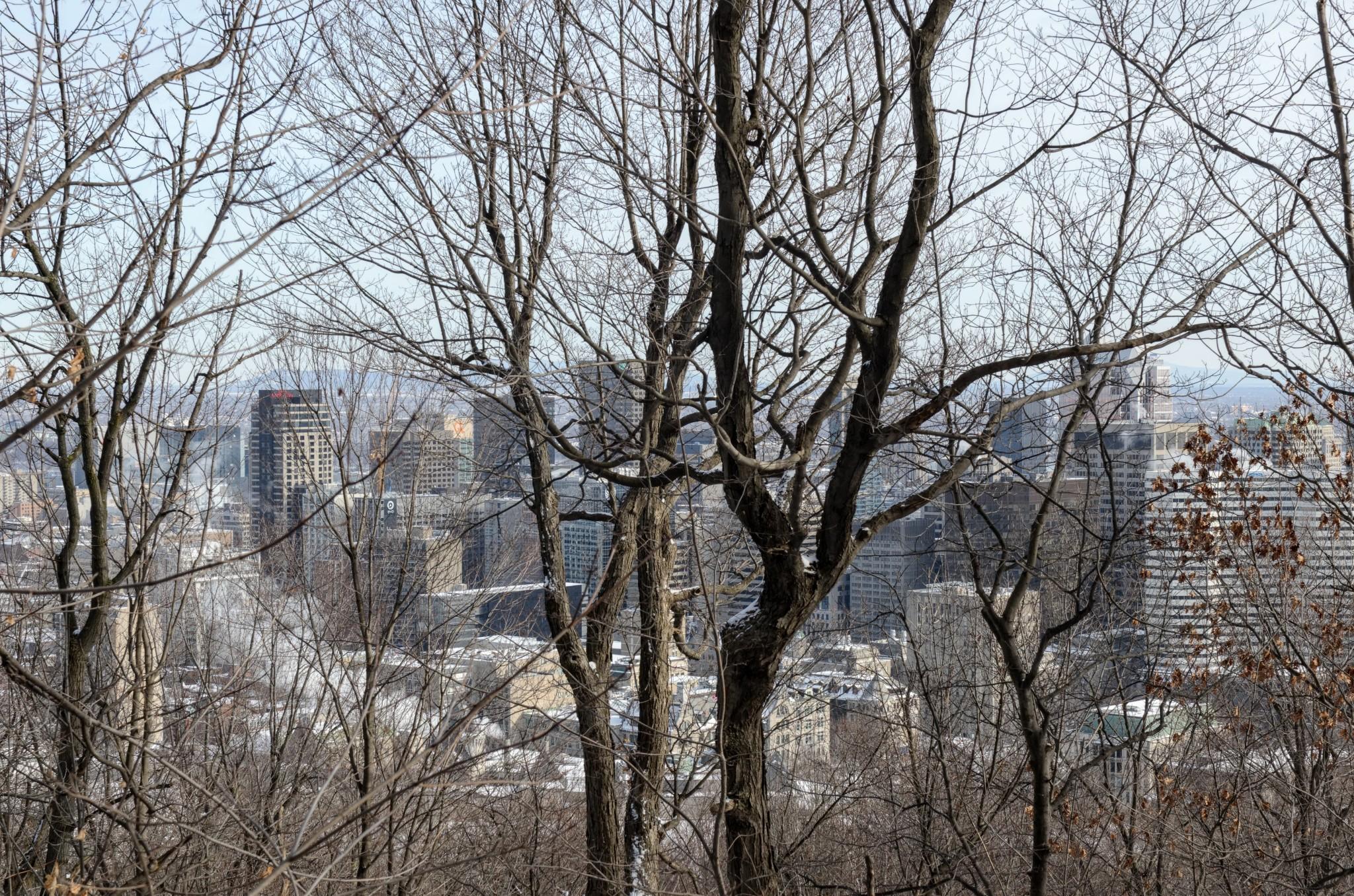 Vista della città tra le piante del Mont-Royal. Montreal, regione del Quebec, Canada