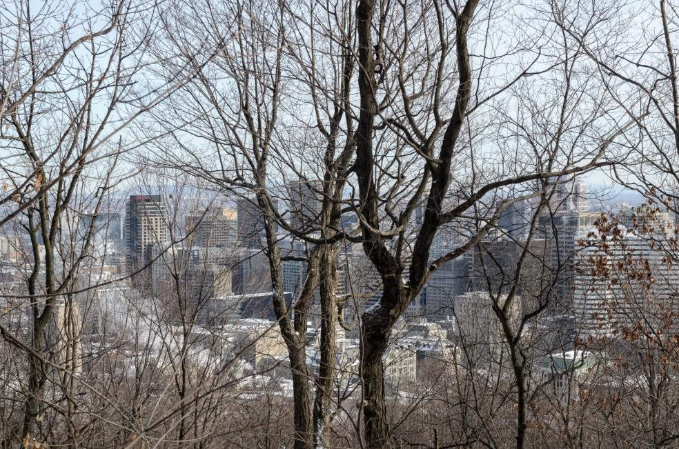 Vista della citta tra le piante del Mont-Royal