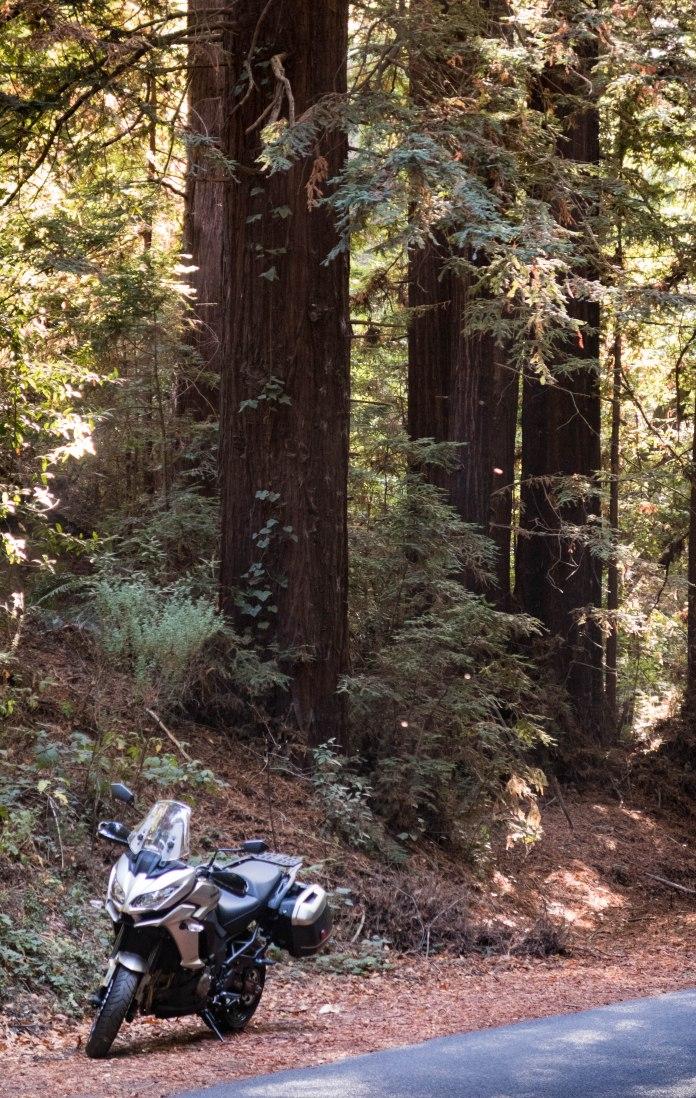 Kawasaki Versys 1000 LT: in the Redwoods
