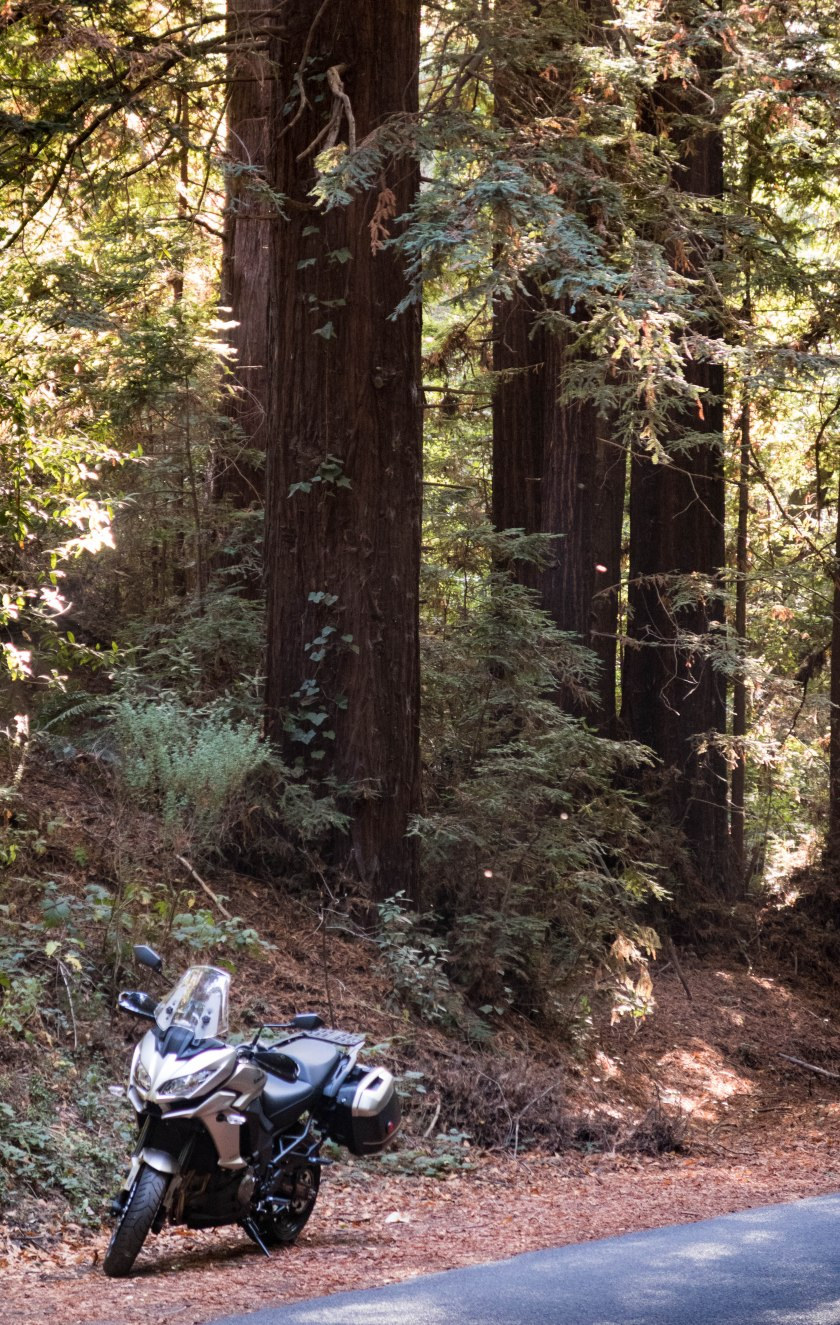 Kawasaki Versys 1000 LT: in the Redwoods
