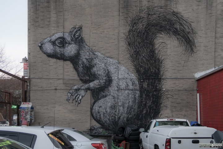 """Squirrel"" mural by ROA, 160 Berry Street Brooklyn, New York, USA"