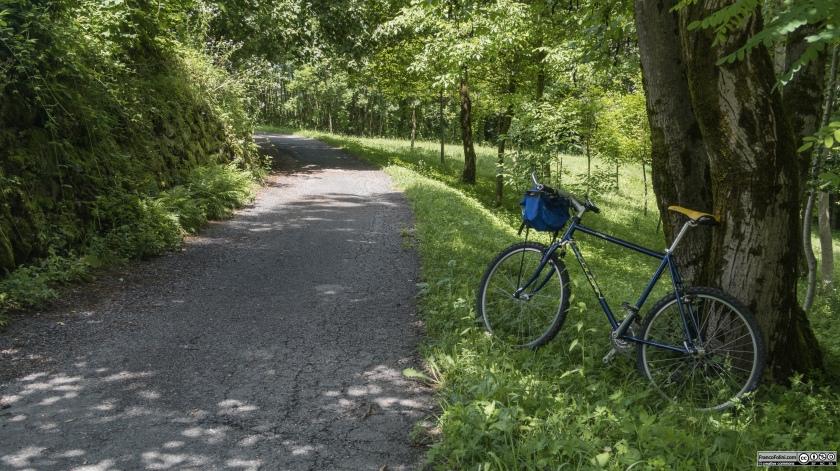 Sentiero Valtellina: il sentiero attraversa i boschi lungo l'Adda nel comune di Castello dell'Acqua