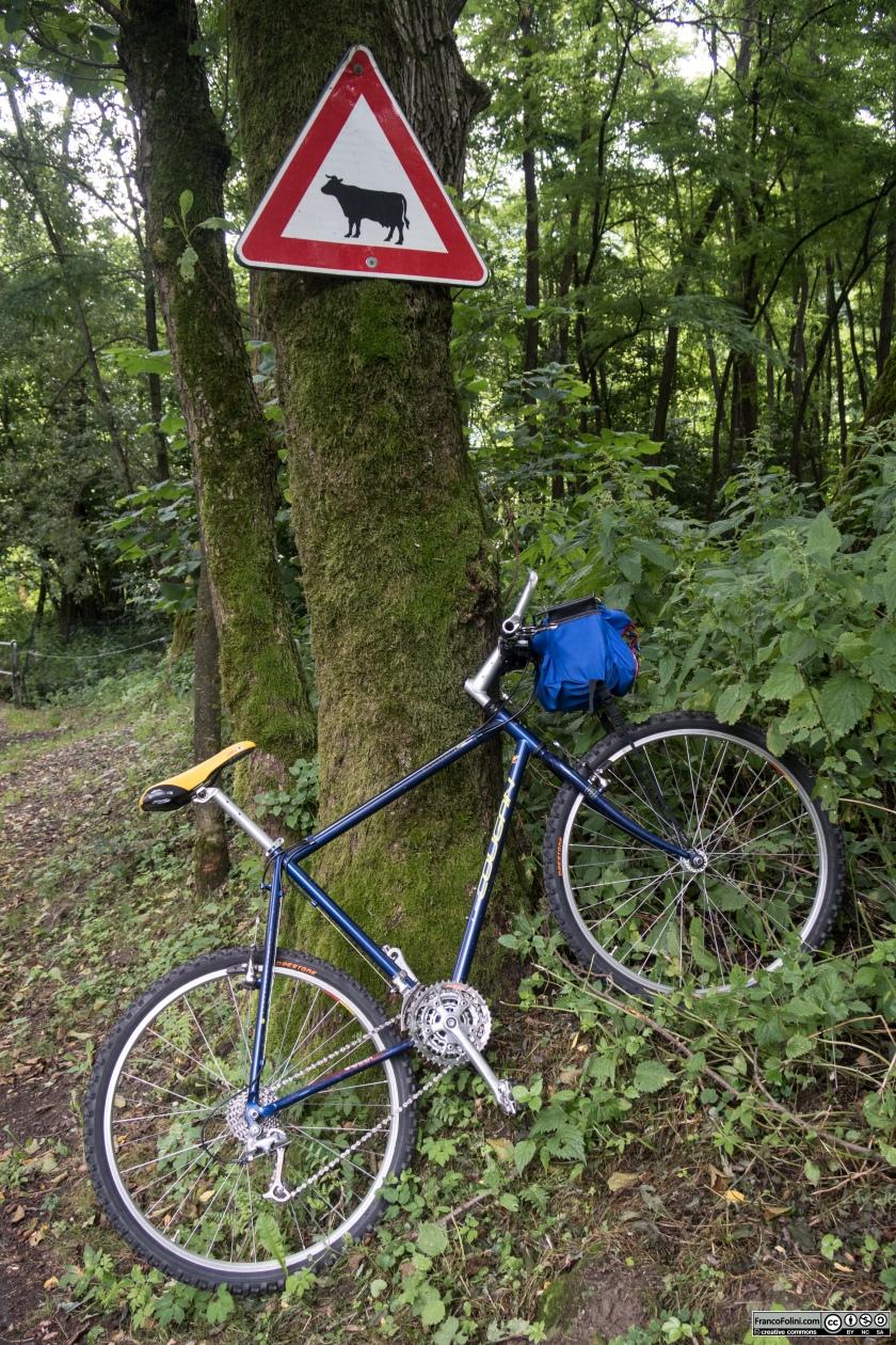 Sentiero Valtellina: il sentiero attraversa zone rurali in cui è frequente incontrare mucche, cavalli e asini al pascolo.