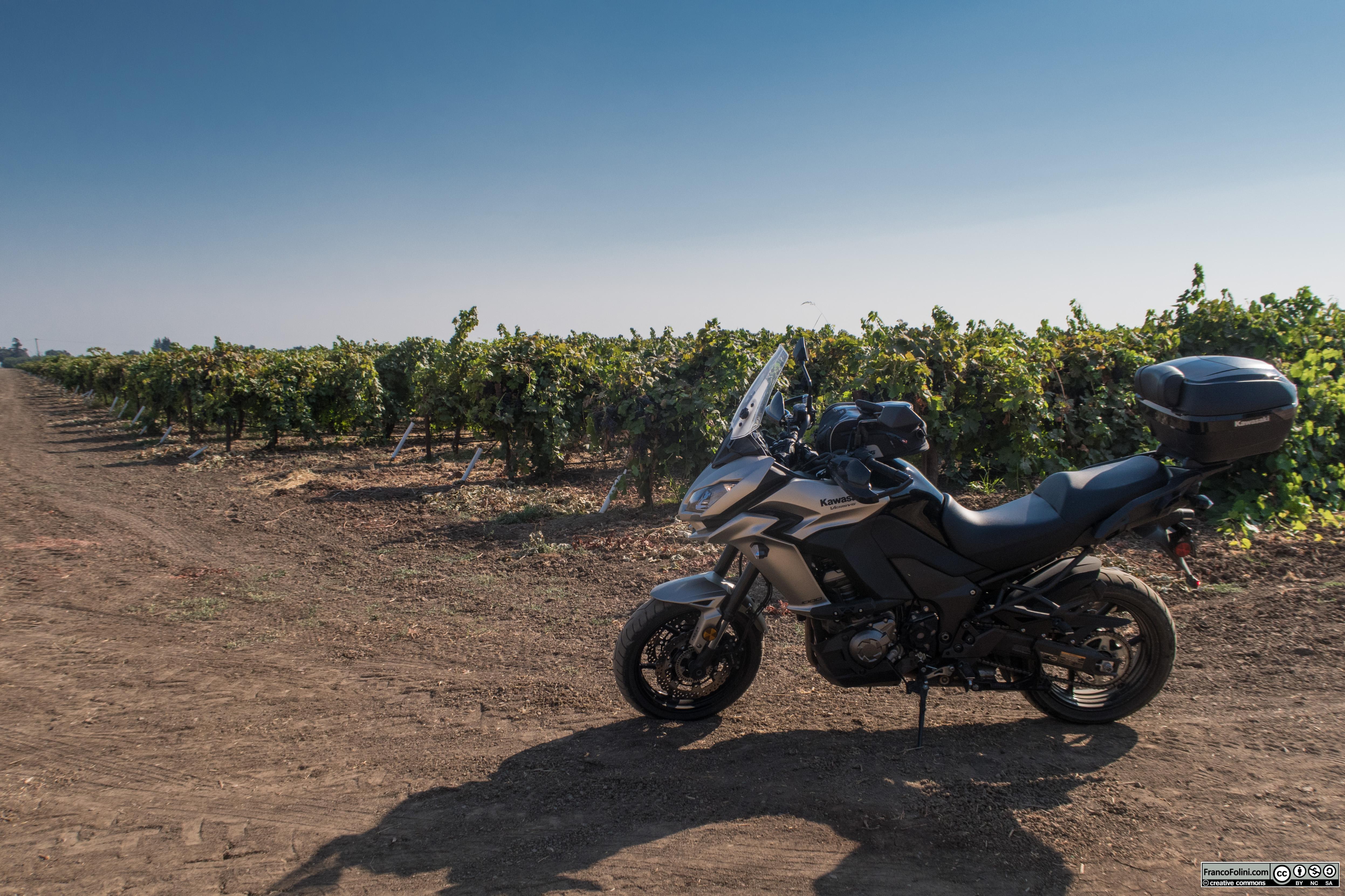 Van Allen Road, Farmington, CA: vigne