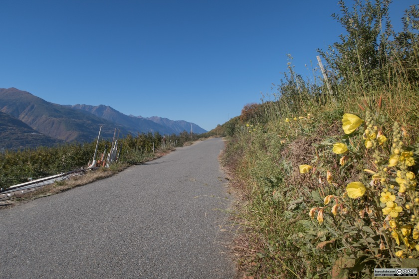Da Ponte Valtellina la strada portandosi in quota sale tra i meleti