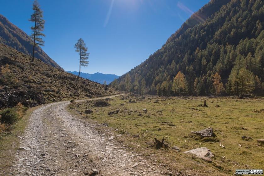 I pascoli tra l'Alpe Campiascio e il Piano dei cavalli