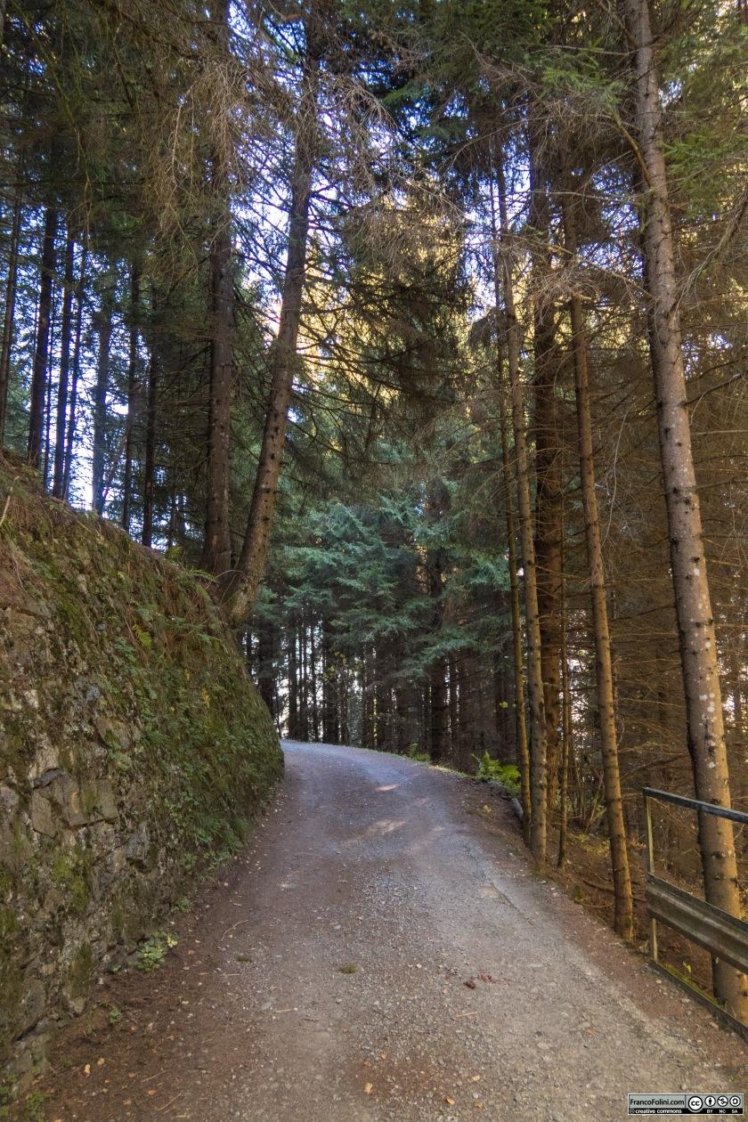 Per lunghi tratti i boschi di conifere costeggiano la decauville creando un ambiente quasi magico.