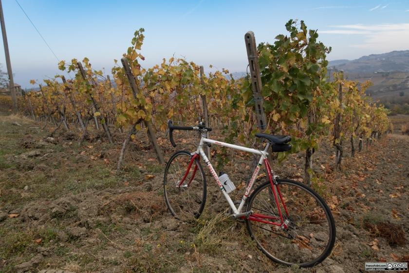 Questa e' la zona in cui si produce in particolare il Pinot Nero dell'Oltrepò