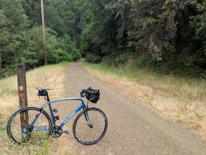 La pista ciclabile sterrata che attraversa il Samuel P. Taylor State Park