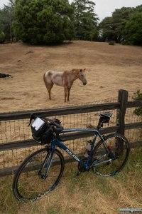 Incontri equini lungo la strada.