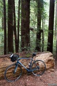 Ancora tra le sequoie del Samuel P. Taylor State Park