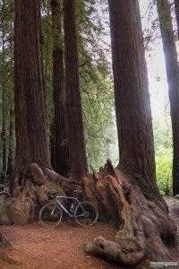 Tra le sequoie del Samuel P. Taylor State Park