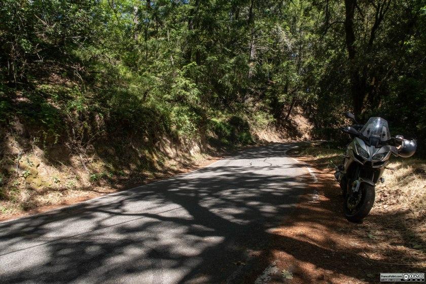 Nei boschi lungo la California Route 35 che corre sullo spartiacque delle montagne che separano la Silicon Valley dalla costa dell'oceano Pacifico.