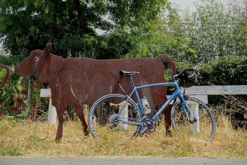 Ohlone Greenway e' una pista ciclabile che attraversa gli abitati di Richmond e Berkeley. In mancanza di veri bovini pascolo la pista ciclabile e' stata dotata di vacche di metallo.