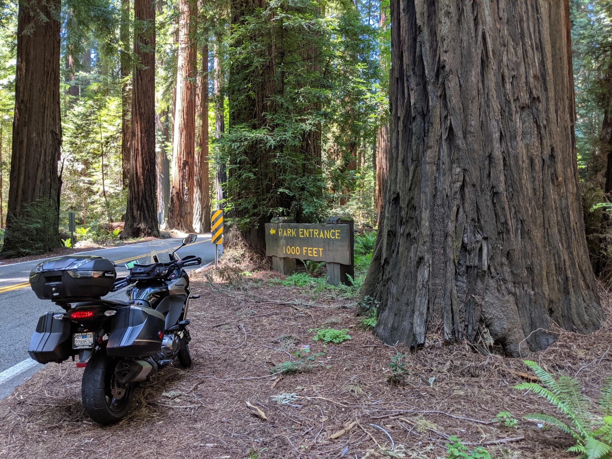 La Kawasaki Versys tra le altissime sequoie del Richardson Grove State Park a Garberville, CA