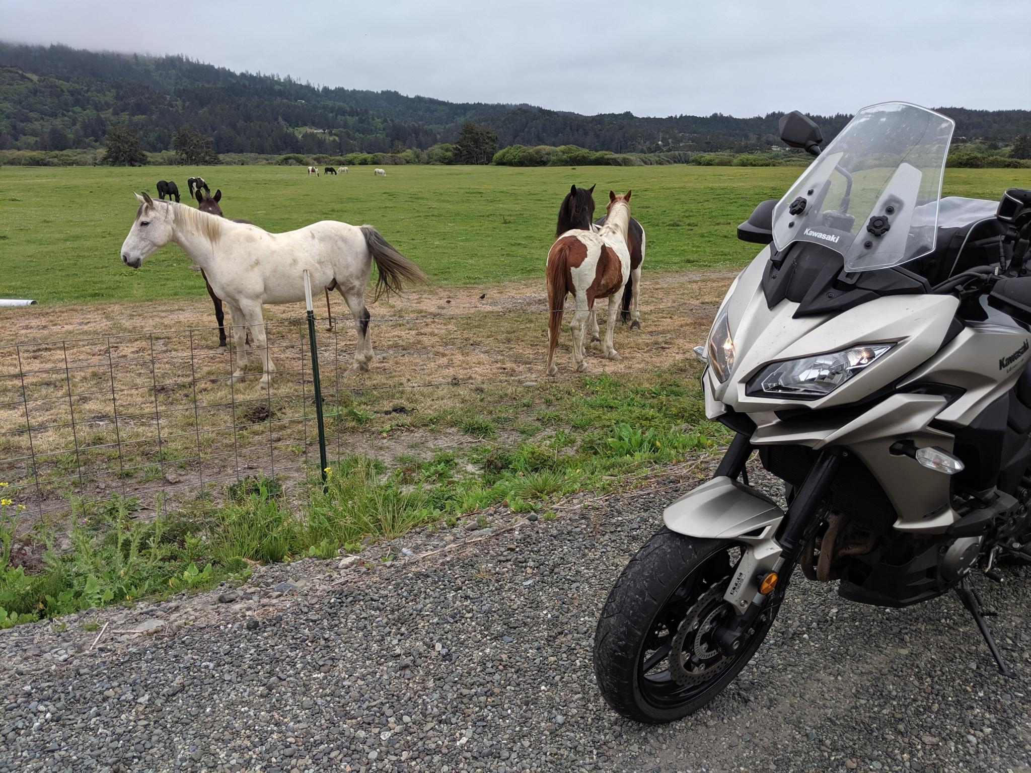 Cavalli al pascolo a Pistol River osservano incuriositi la kawasaki Versys. Pistol River è uno dei primi villaggi che si incontrano lungo la Highway 101 entrando in Oregon dalla California.