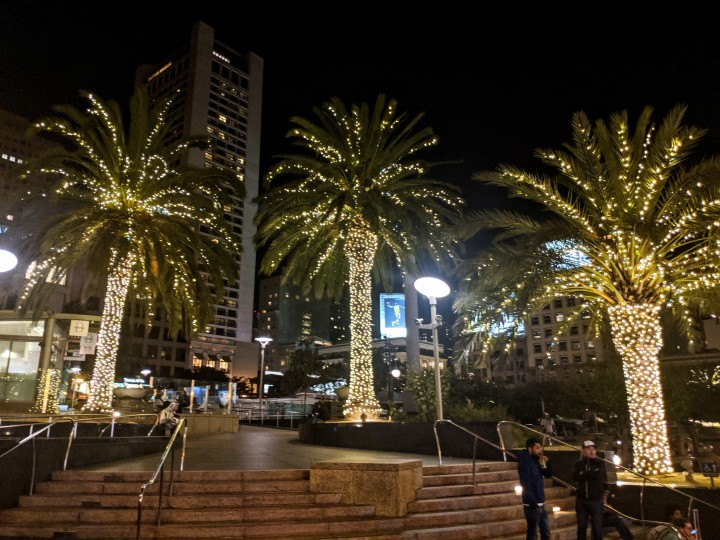 Palm trees on Union Square by night, San Francisco, California