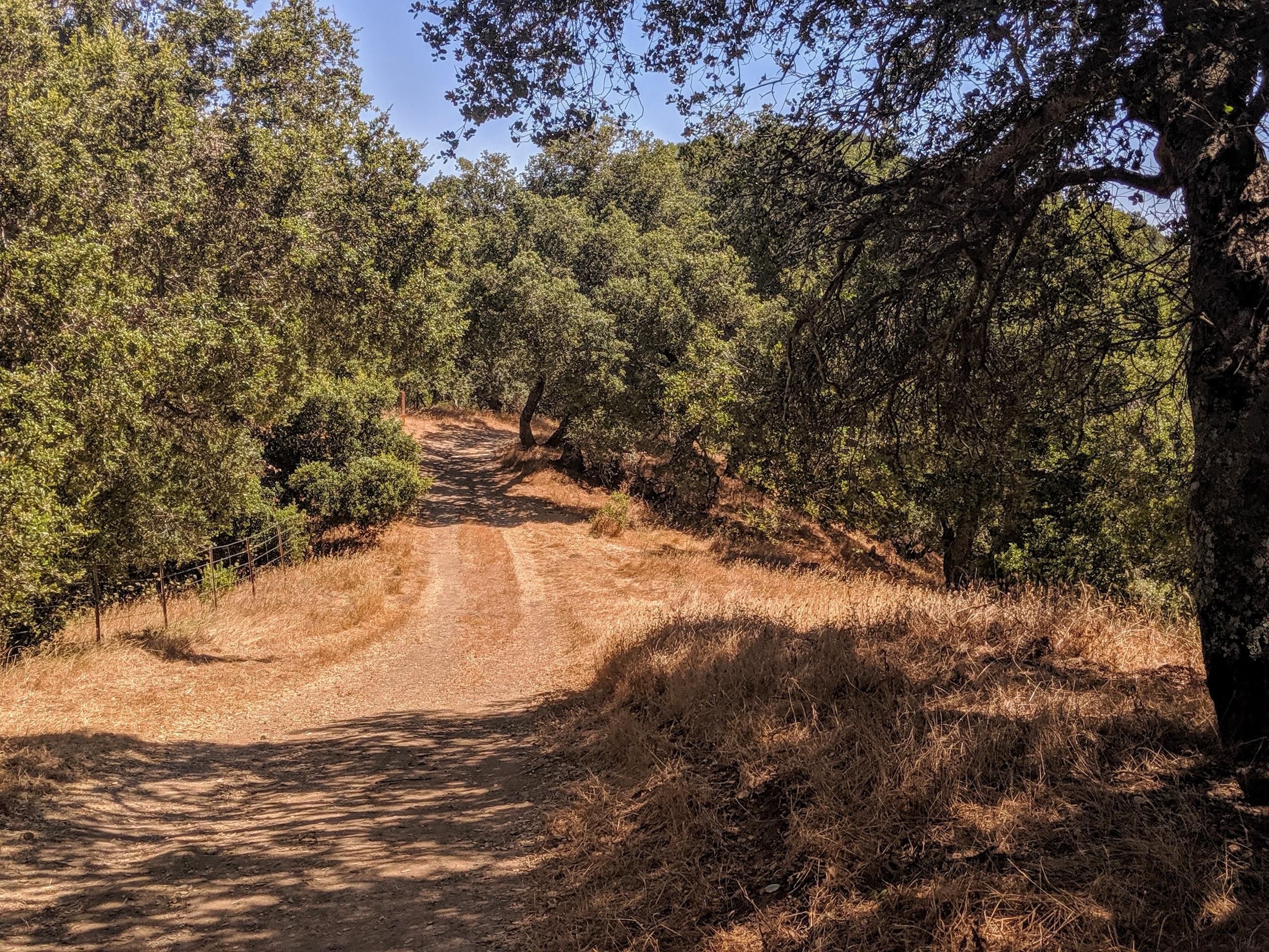 Oltre le colline di Oakland e Berkeley c'è una vasto parco naturale che offre numerosissime opportunità' di trail running. I miei percorsi preferiti partono da Bear Creek Staging Area, dove si può lasciare la macchina. In genere seguo un percorso di circa 10 km con alcuni importanti saliscendi.