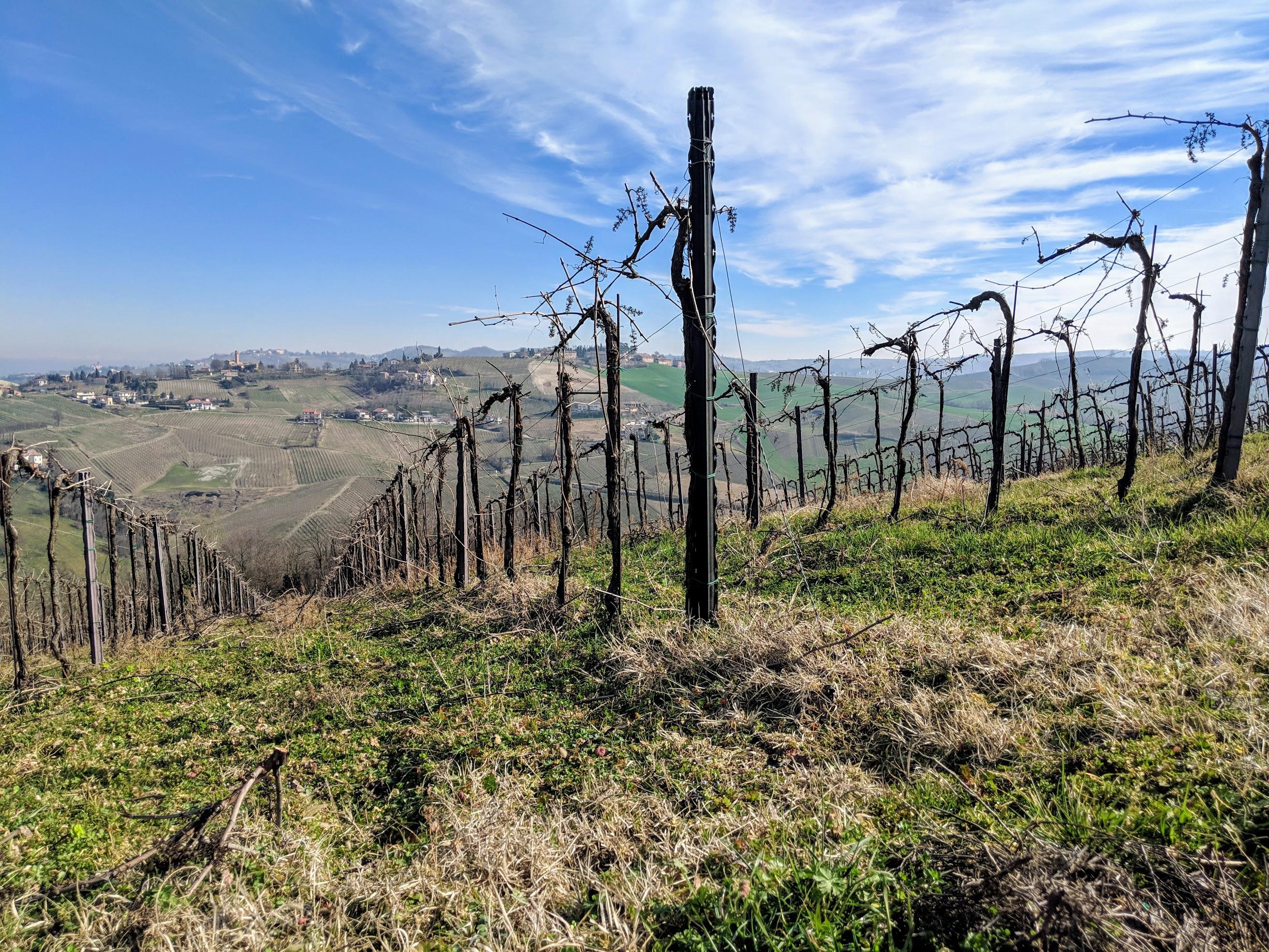 Correre nell'Oltrepo Pavese offre continue viste su un paesaggio agricolo collinare veramente bello e che cambia continuamente con l'ora del giorno e il periodo dell'anno.