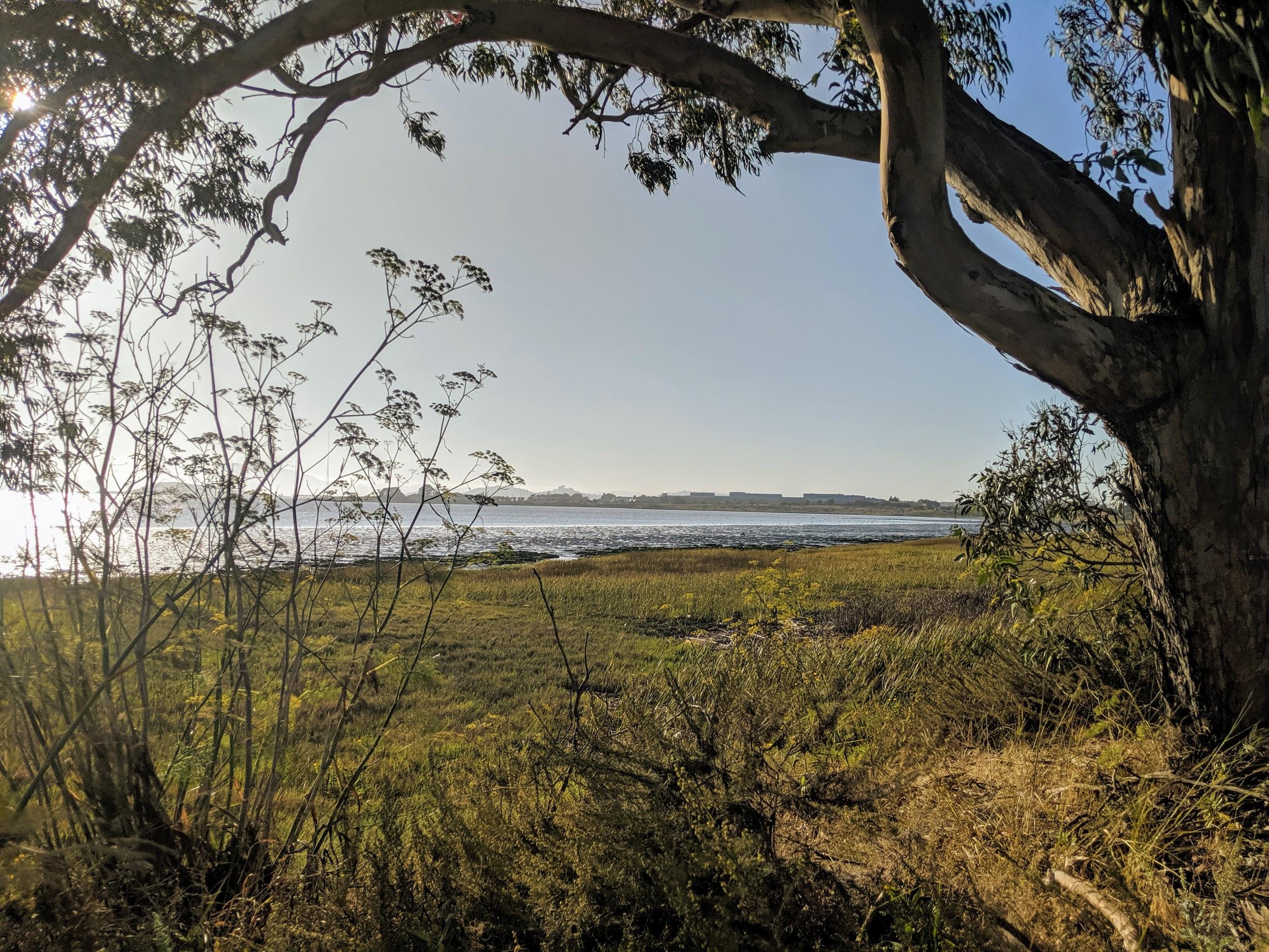 """La baia di San Francisco fotografata dal sentiero Bay Trail che la costeggia da sud a nord lungo il lato est. Alcuni punti sono molto vicini all'autostrada rendendo il percorso un po' meno """"naturale""""."""