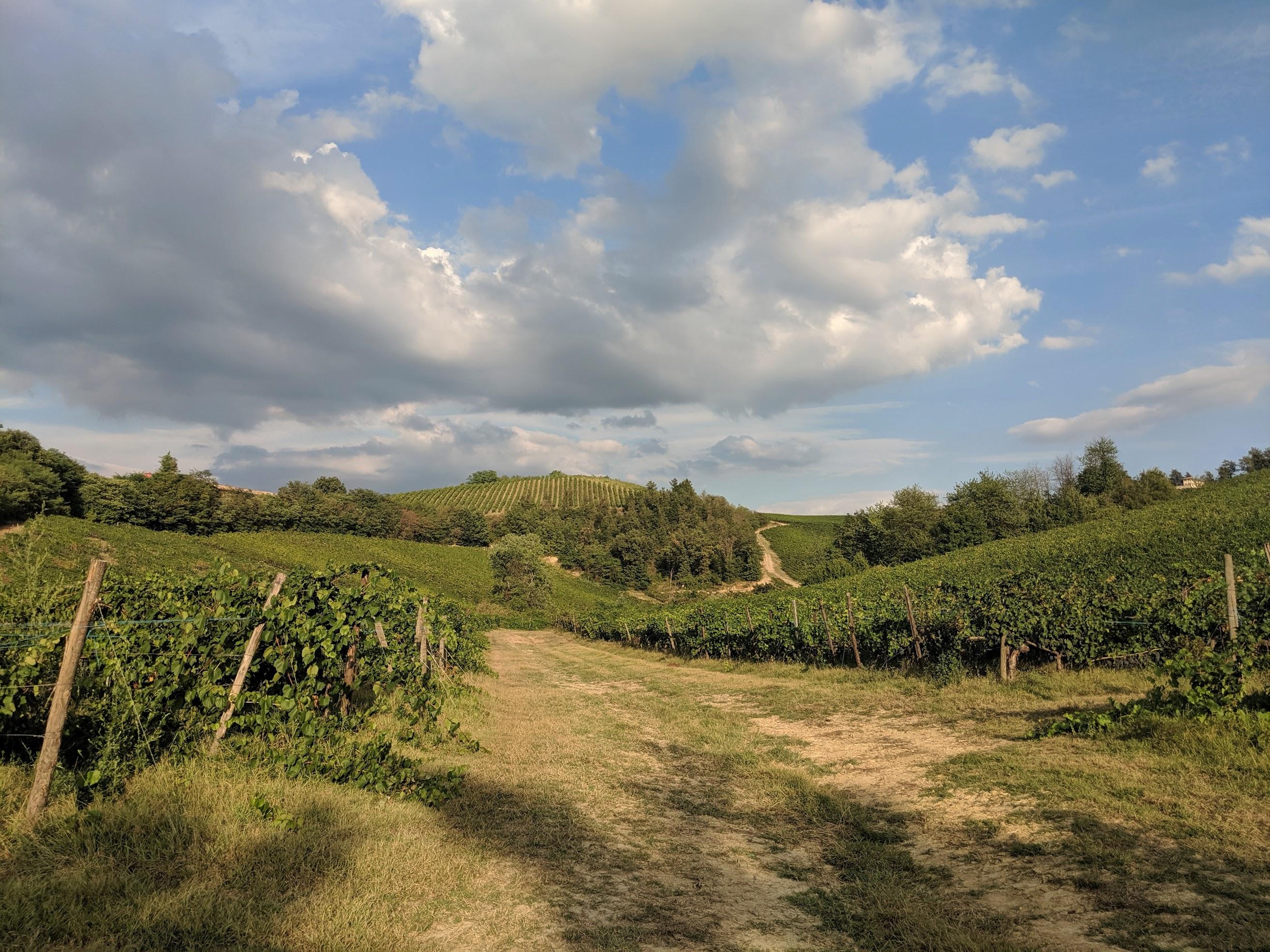Correndo nell'oltrepo Pavese si attraversano vigne e campi, si sentono profumi, si percepisce il sole e il vento sulla pelle. Insomma, una vera esperienza multisensoriale!
