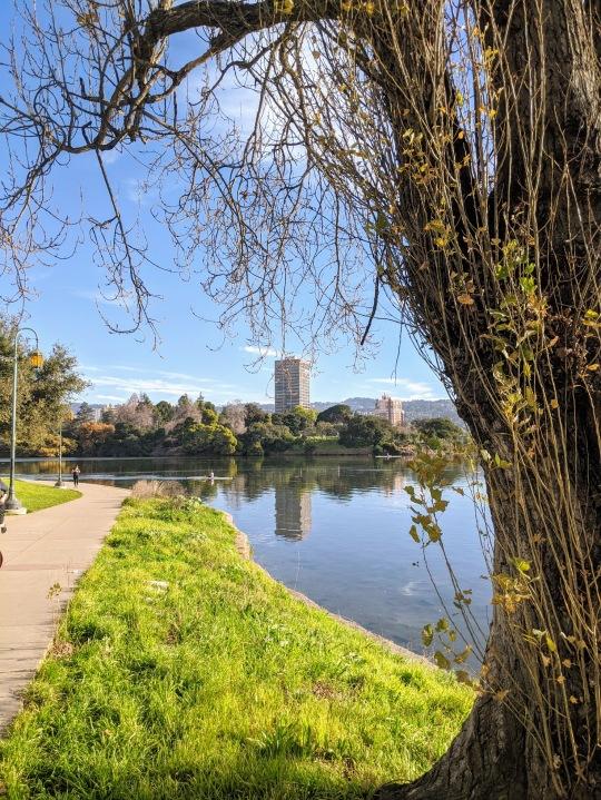 Lake Merritt a Oakland. Il giro del lago misura esattamente 5 km. Percorso perfetto per una corsetta rilassata la domenica mattina. Si corre nel verde del parco e si incontrano tanti personaggi singolari.